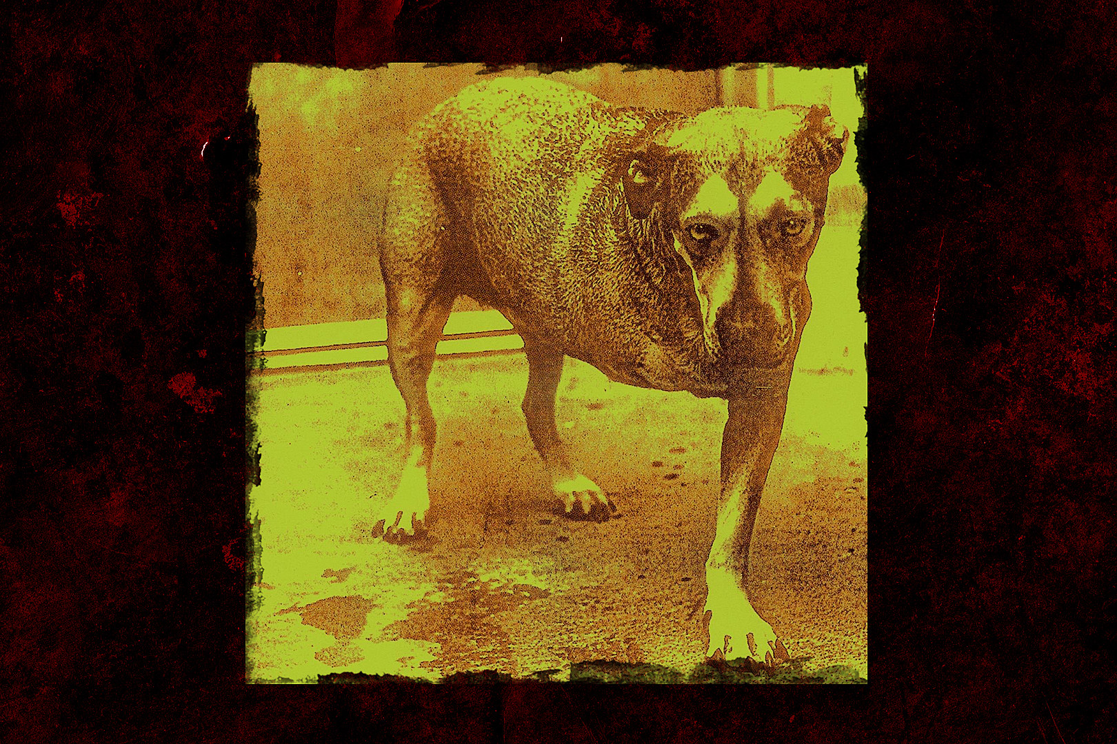 23 Years Ago: Alice in Chains Release Their Self-Titled Album
