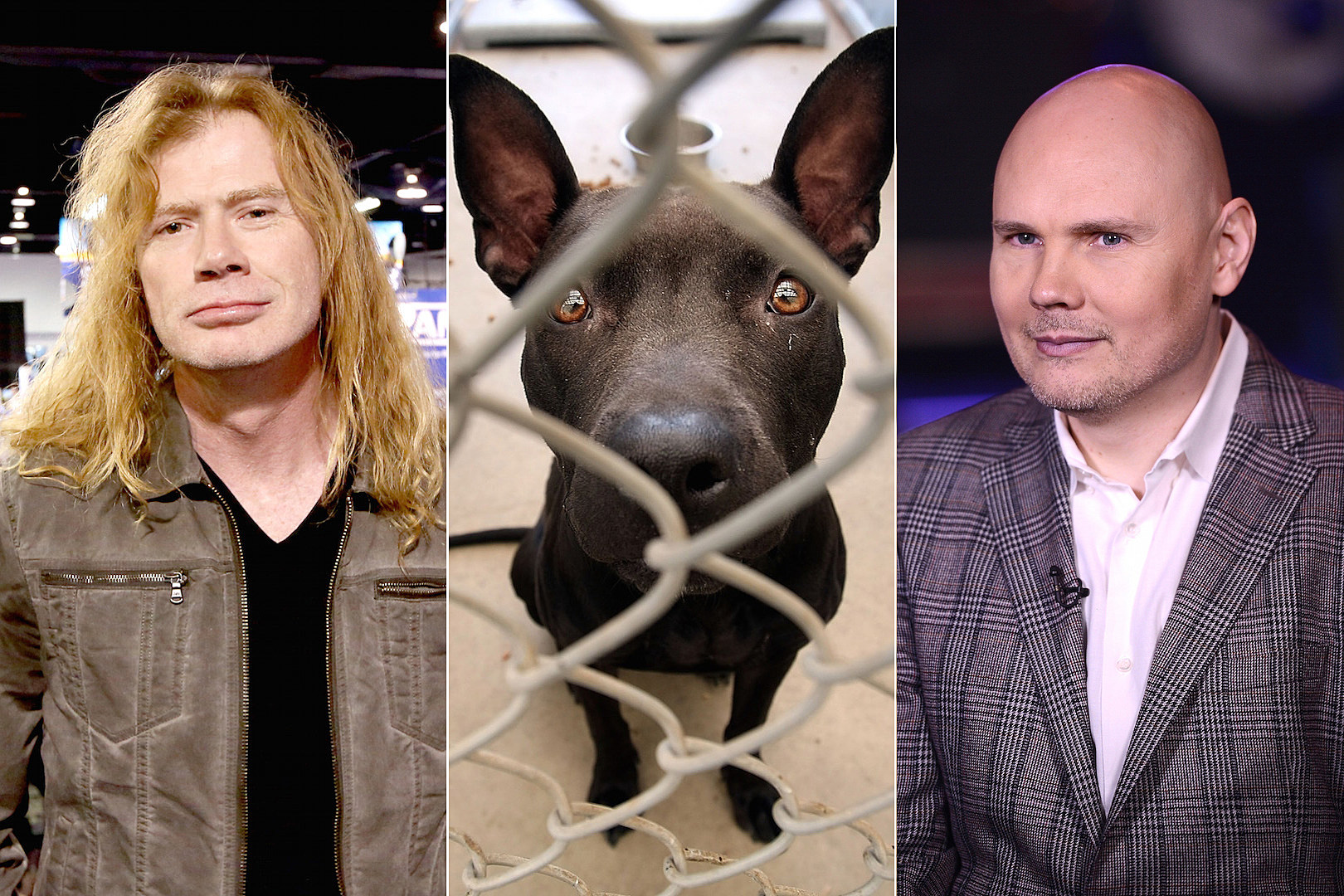 10 Rockers Who Rescue Animals