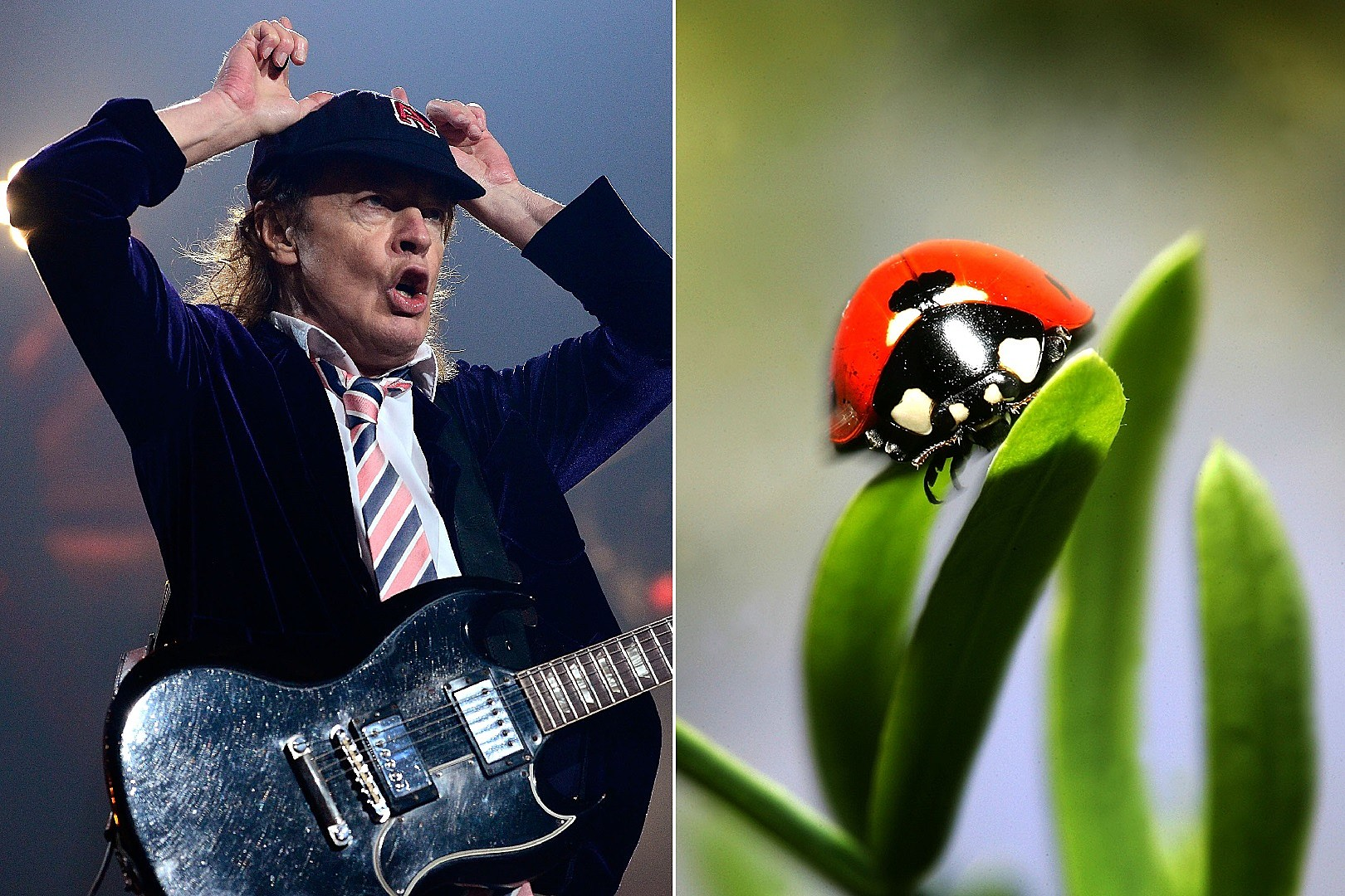 Rock and Roll Actually Is Noise Pollution – to Ladybugs – According to New Biology Study   The Rock of Rochester