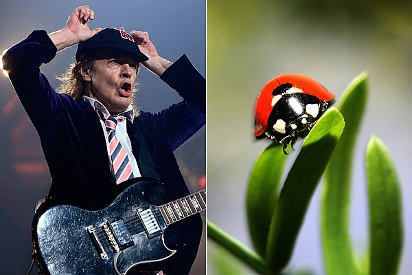Rock and Roll Actually Is Noise Pollution Says New Biology Study