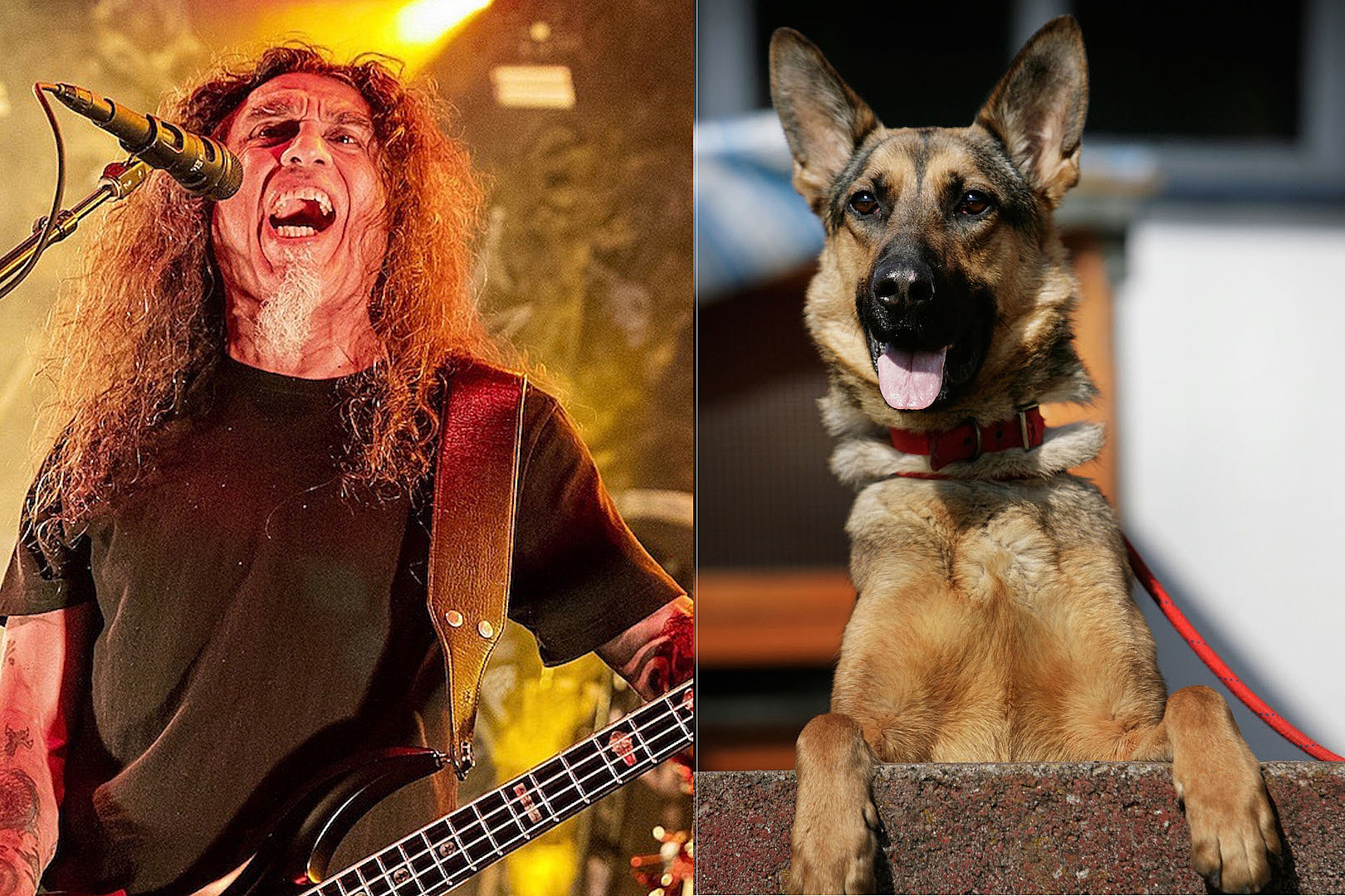 You Can Get Slayer, Judas Priest + More Themed Collars for Your Dog
